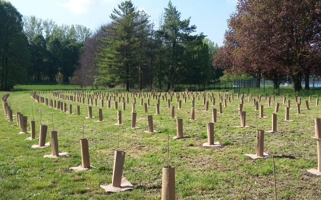 La Giunta approva il Bilancio Arboreo: cresce il numero di piante in città