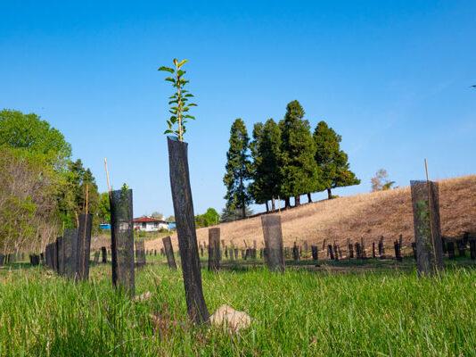 3000 nuovi alberi al Parco Piemonte grazie a Ikea